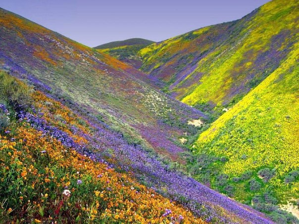 flower valley india